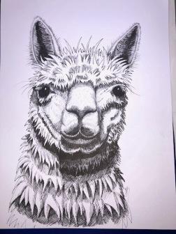 llama front