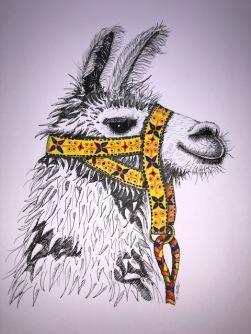 llama in reins